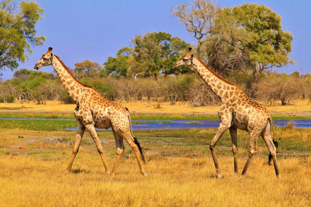 Dix (10) destinations africaines à visiter absolument - Bostwana